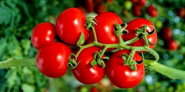Organik Gıdalar Daha Besleyici midir?
