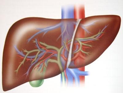 Karaciğer Yağlanması (Steatosis) Tanısı ve Tedavisi