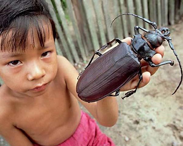Entomofobi Nedir?