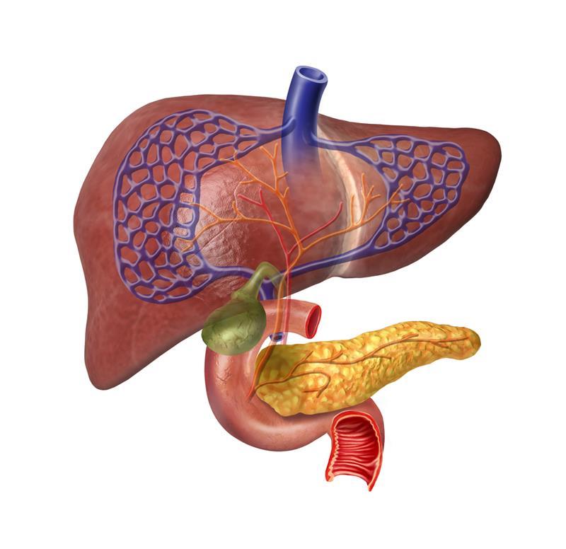 Pankreas ve İşlevi Hakkında Bilinmesi Gerekenler