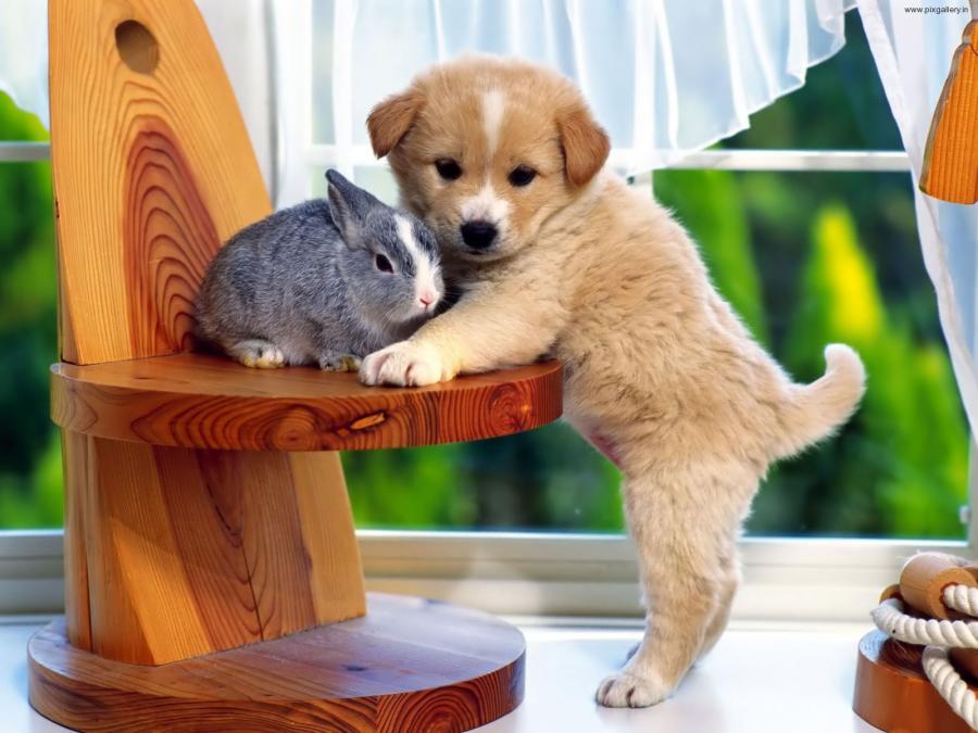 Hayvanlarda 'Saf Kan' Algısı ve Toplu Sağlığına Etkisi
