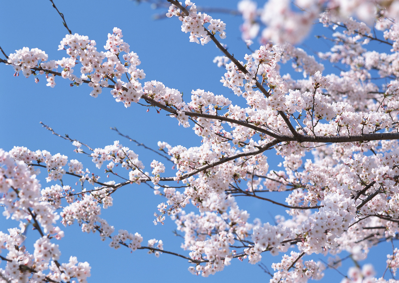 Bahar Havalarında Artan Hastalıklar Nelerdir?