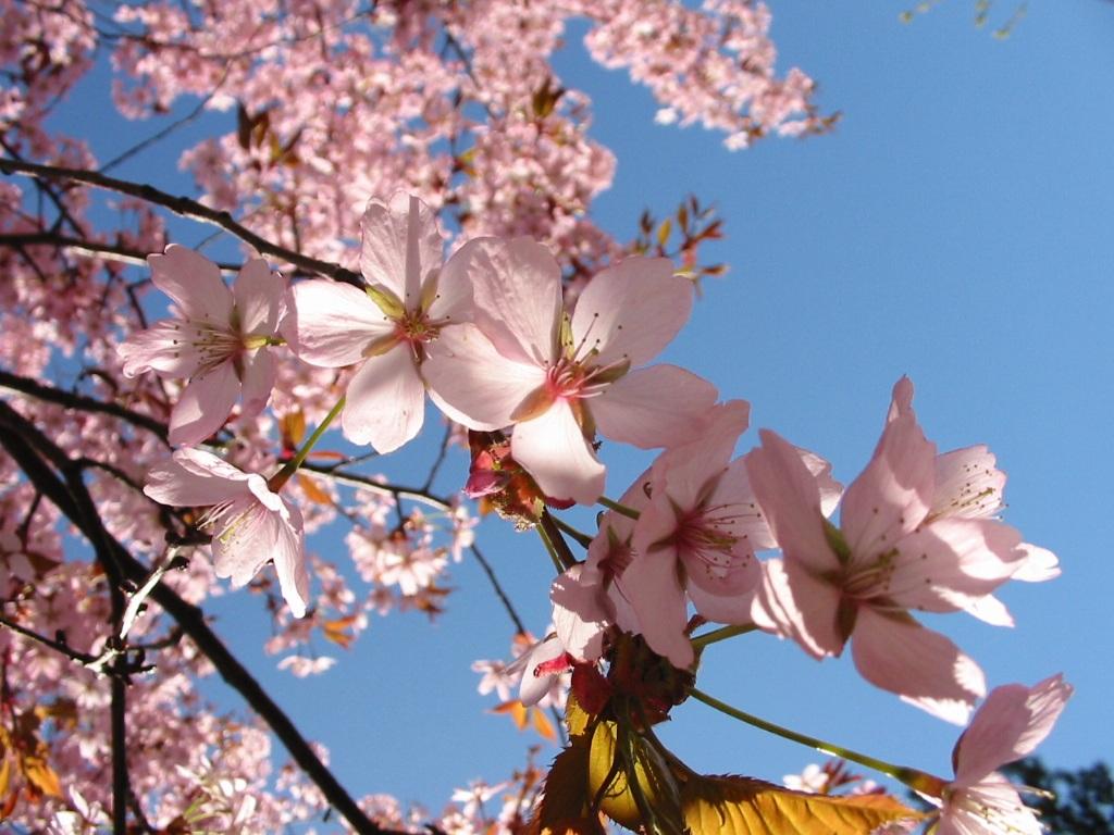 Bahar Aylarında Nasıl Beslenmeliyiz? Uzman Önerileri
