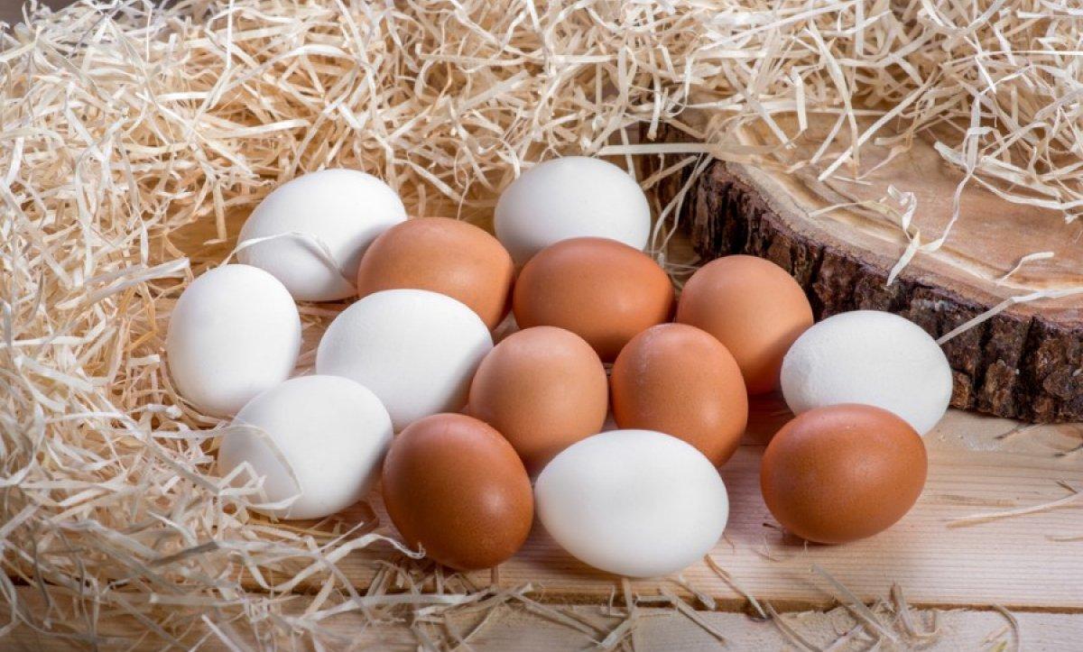 Yumurta Renkleri Neden Farklı?