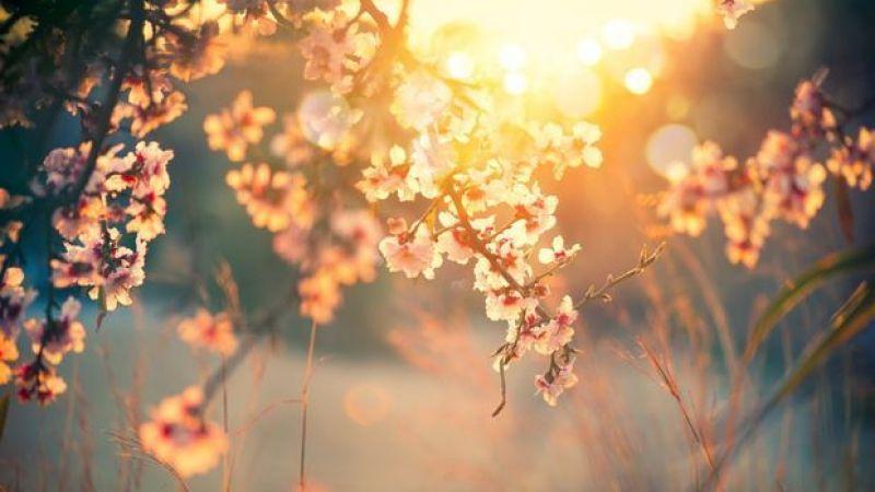 Bahar Aylarında Güneşten Faydalanın