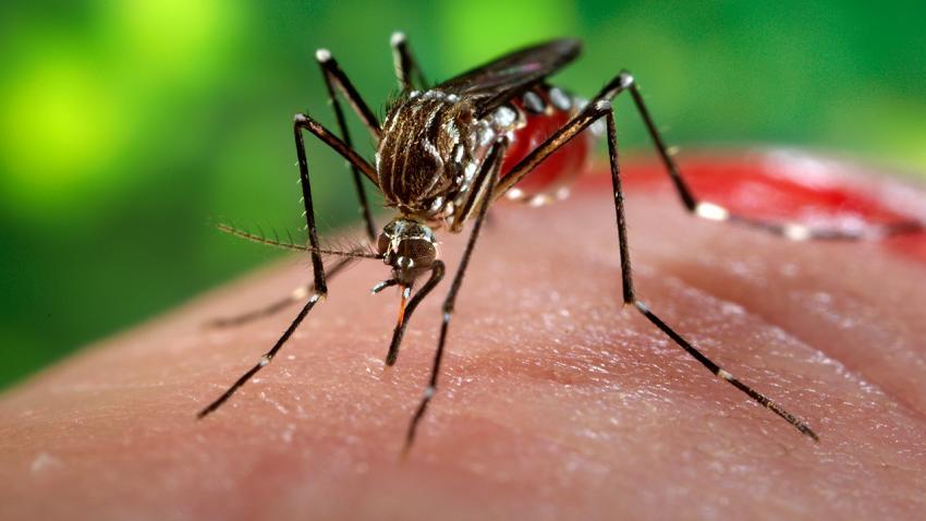 Zika Virüsü Nedir? Zika Belirtileri,Tanı ve Tedavisi Nasıldır?