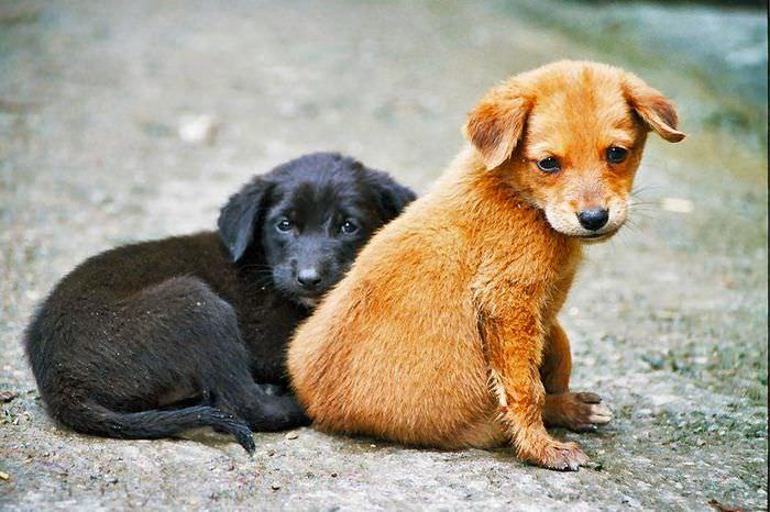 Havalar Soğudu..Bize Dolaşırken Eşlik Eden Sokak Hayvanlarını Unutmayın!