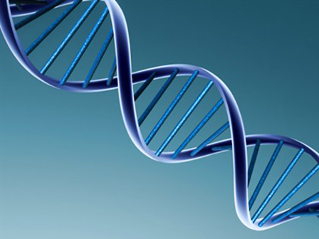 Genetik Çeşitlilik Arttıkça Yaşam Şansı da Artar!