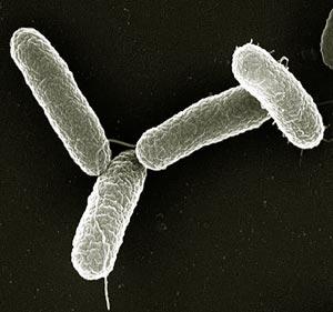 Tifo Hastalığı Nasıl Bulaşır ve Tifo Hastalığından Nasıl Korunabiliriz?