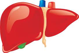 Karaciğerimizi Nasıl Koruruz?