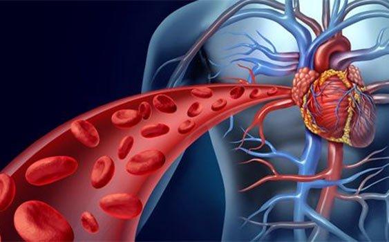 Arteroskleroz: Damar Serliği Nedir? Sebepleri Nelerdir?