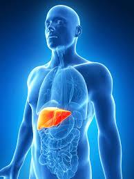 Hepatit C Hastalığının Kuluçka Süresi Nedir?