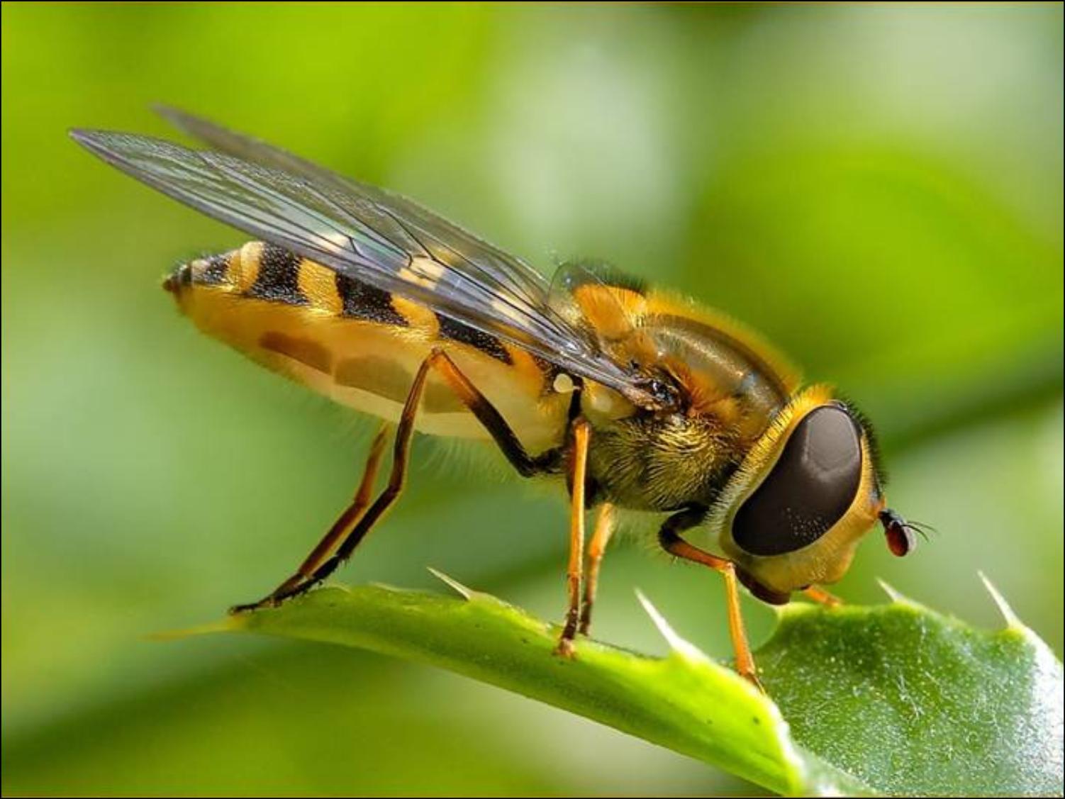 Arı Alerjisi Nedir? Nelere Dikkat Edilir?