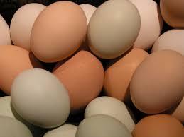 Yumurtayı Yıkamadan Yemeyiniz
