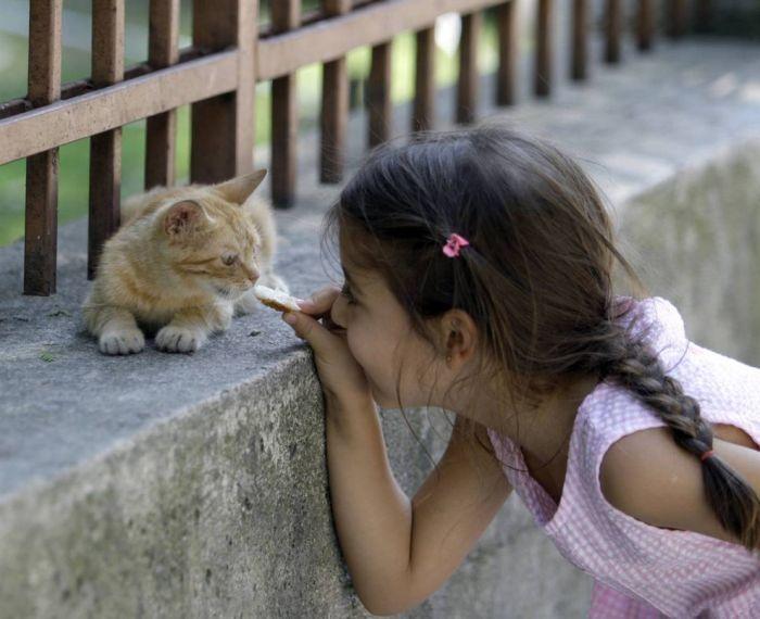 Şeker Hastaları ve Kediler