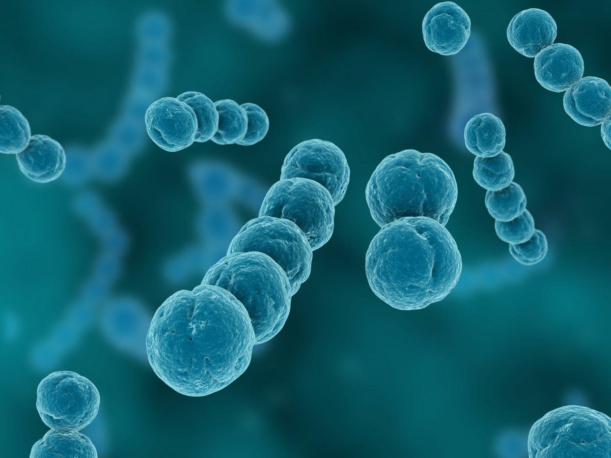 Enfeksiyon Hastalıklarının Belirtileri ve Etkenleri Nelerdir?