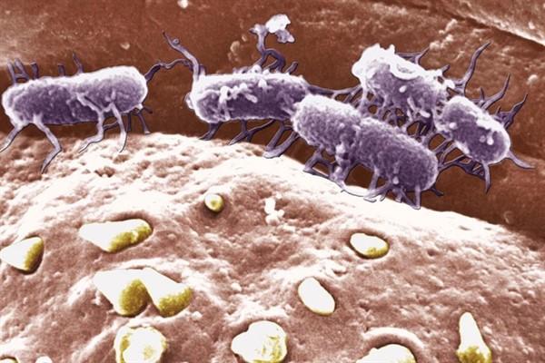 Tifo (Kara Humma) Hastalığı Nedir? Nasıl Bulaşır?