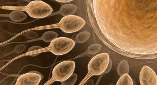 Erkeklere Kötü Haber: Sperm Sayıları Azalıyor mu?