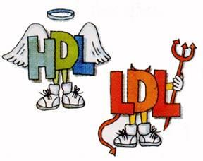 İyi Kolesterol Nedir? İyi Kolesterol (HDL) Nasıl Yükseltilir?