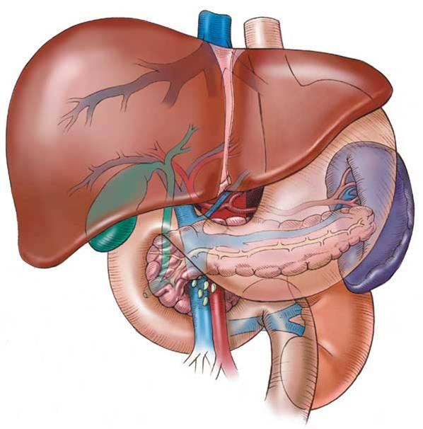 Karaciğer Büyümesi Olarak Bilinen Hepatomegali Nedir?