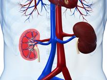 Böbrek Hastalıklarında GFR (Glomerüler Filtrasyon Hızı) Testi Nedir?