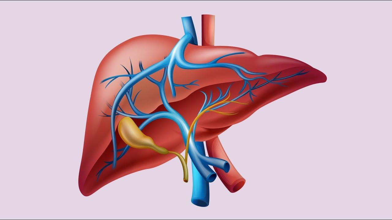 Karaciğer Fonksiyon Testleri Nelerdir? Nasıl Yorumlanır?