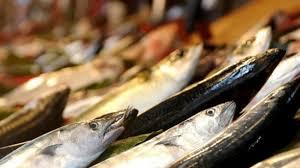 Kendi Balığımız Uskumru