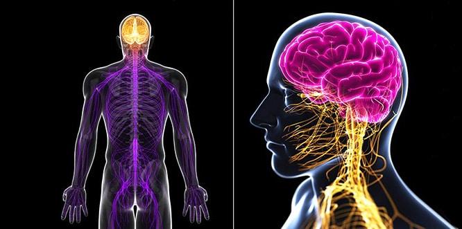 Polinöropati Nedir? Polinöropati Belirtileri,Tanı ve Tedavisi ile Türleri Nelerdir?