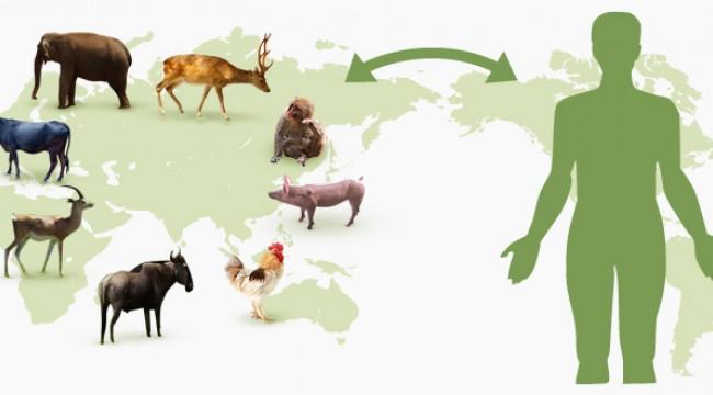 Zoonotik Hastalıklar (Zoonozlar) Nedir? Nasıl Yayılır ve Nasıl Korunuruz?